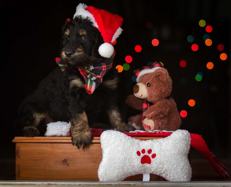 Top 8 Christmas Gifts For Pets