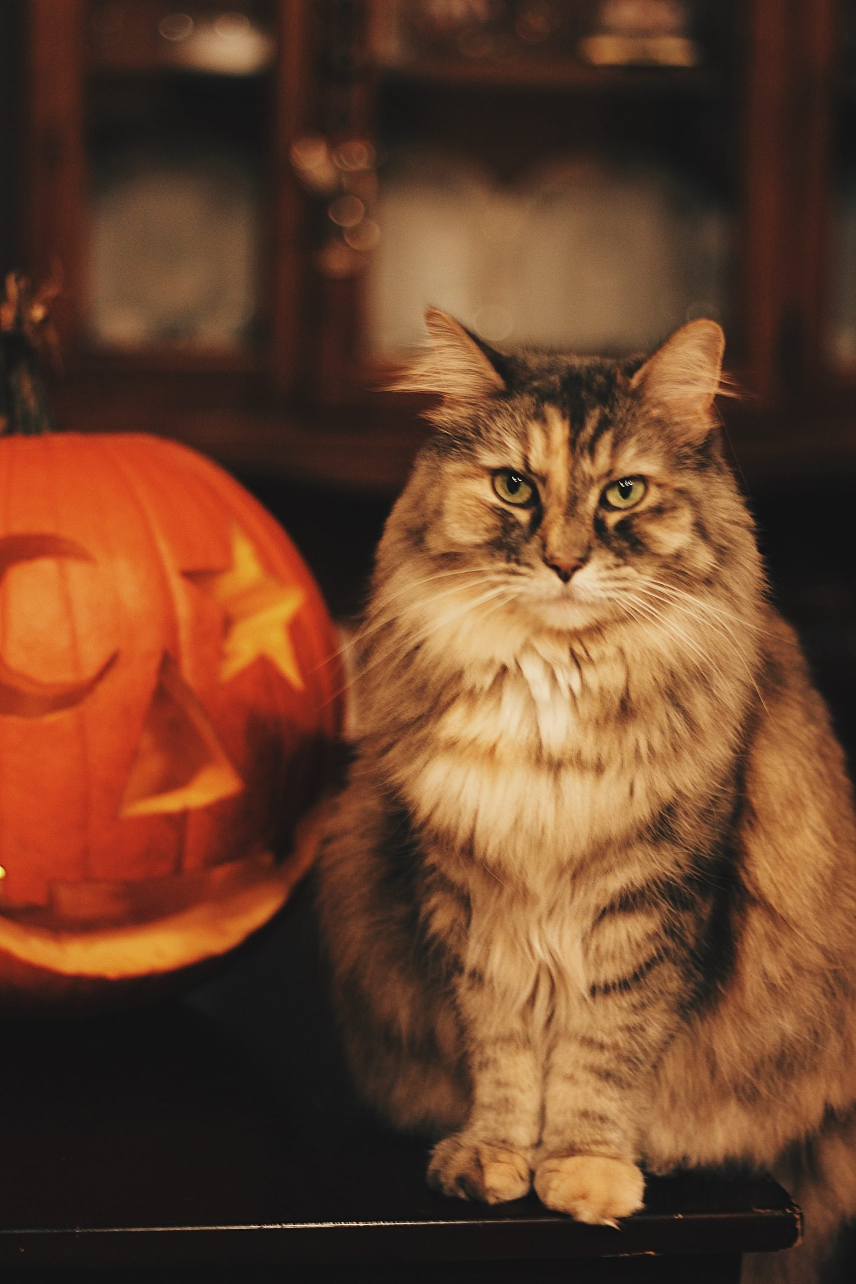 10 Halloween Safety Tips for Pet Owners